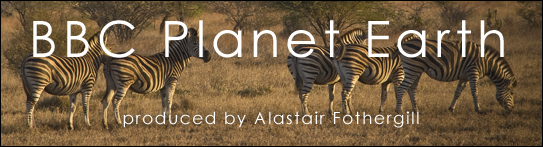 bbc planet earth, 2006, produced by Alastair Fothergill